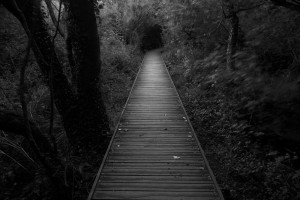 1007621__dark-path_p