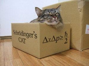 schr_dinger_s_cat_sleeping_awake